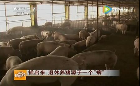"""禚启东:退休养猪源于一个""""病"""""""