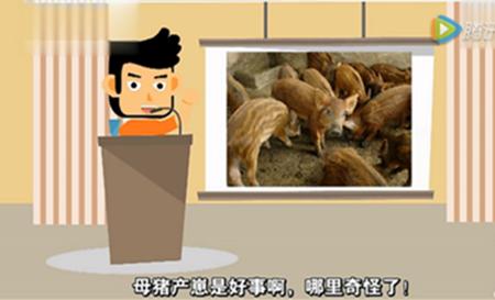 【实用养猪技术】李敏:猪病毒视频病综合防治周圆环33孕图片