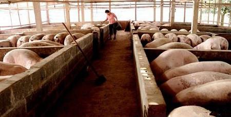 传统的养殖圈舍改造成新型发酵床养殖模式