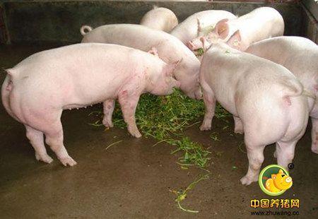 养猪场驱虫应注意的四个方面 不看后悔!