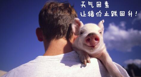 一周综述:本周天气因素将引领猪价止跌回升