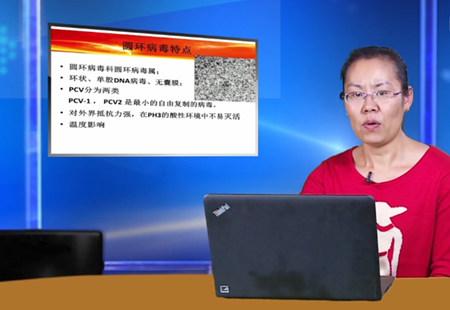 【实用养猪技术】李敏:猪圆环病毒病综合防治