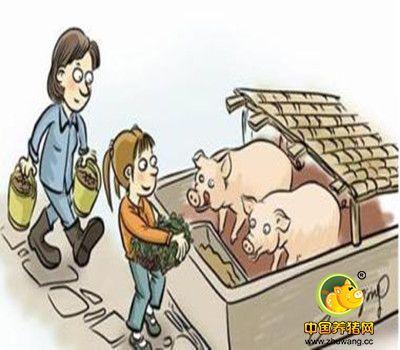 中小型养猪户心中的痛又有谁能懂?