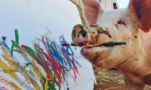 世界上唯一一只会画画的猪,用才艺免于被熏肉(图)