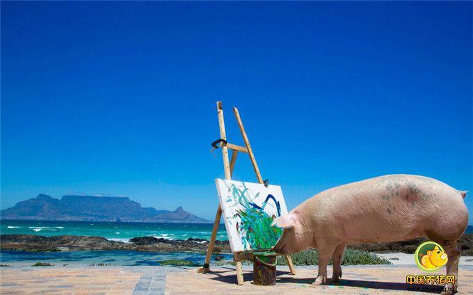 """南非猪界""""毕加索""""作画天赋引关注"""