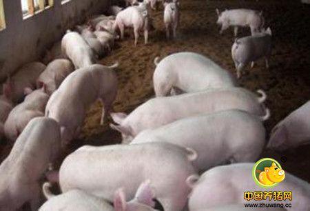 猪气喘病的诊断要点及防制措施