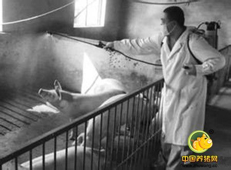 粪尿自动分离工艺,解放了养猪场劳动力