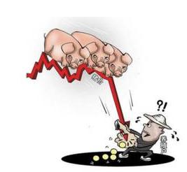 神奇 | 猪价回落虽然不可控,但做好这些的确能减少损失!