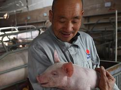 农村老汉养猪一千头,为啥没有补贴?真相原来是……