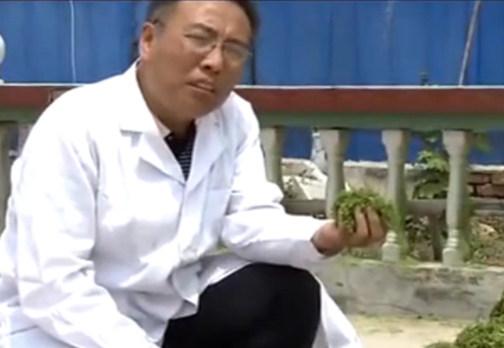 养猪奇招:玉米秸秆发酵变猪饲料
