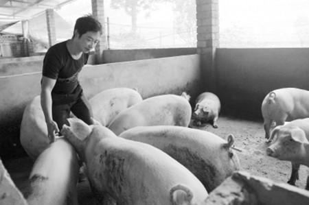 对于管理养猪场十个比较常见的错误想法
