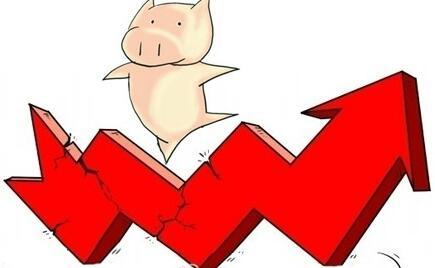 春节前,关于猪价您知道多少?