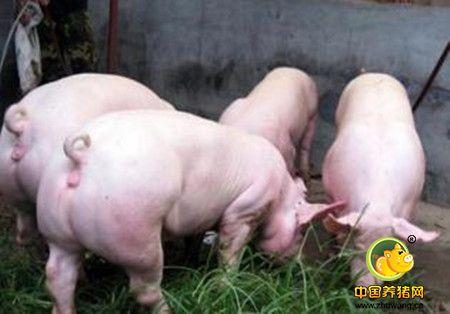 中小型养猪场中存在的技术缺陷
