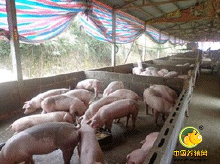 养猪舍位置和采光的关系