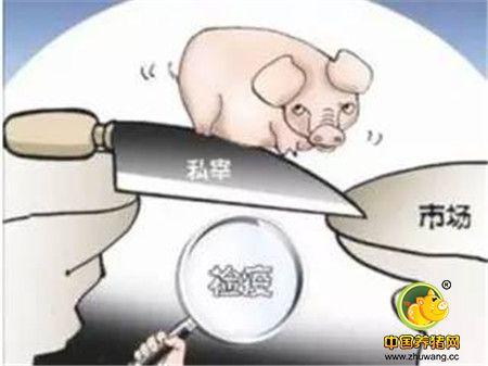 农业部出大招了!坚决曝光屠宰病死猪!