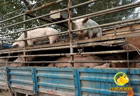 改掉这些,养猪都能赚宝马啦!