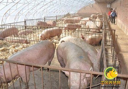 生态养猪场的规模