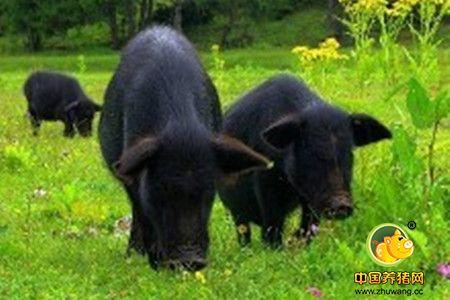 快来看生猪养殖标准化示范场评选,哪些猪场榜上有名?