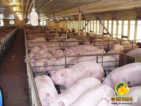 北方农户养猪猪圈的建筑
