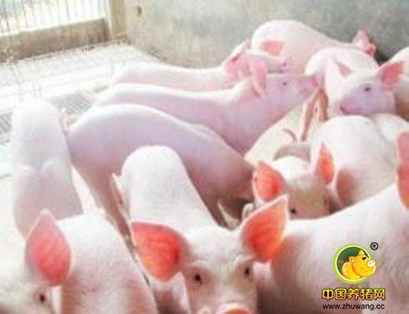 为什么刚出生的仔猪爱拉肚子? - 其它猪病/猪病大全
