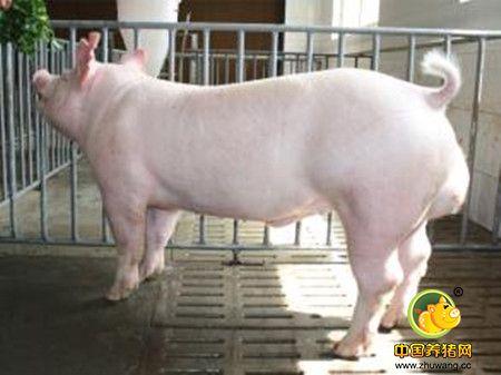 猪脐疝手术