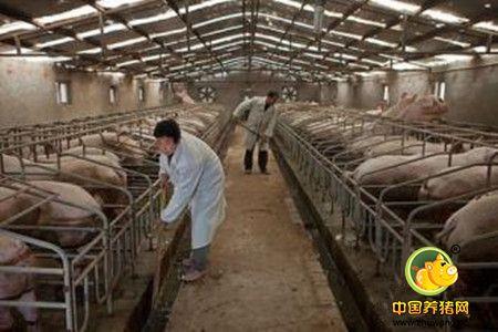 冬季养猪生产中应该注意的管理问题?