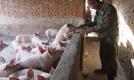 冬季养猪应注意两方面管理