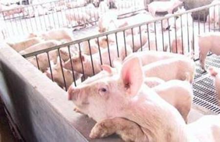 种猪的适宜温度范围是多少?
