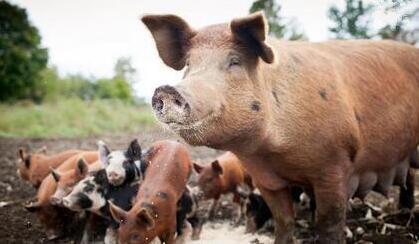 一周综述:消费渐入高峰,猪价再涨空间有多大?