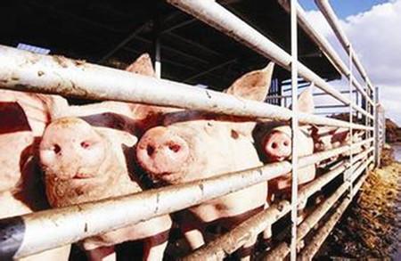 养猪业环保接地气的处理方式,全部都在这里
