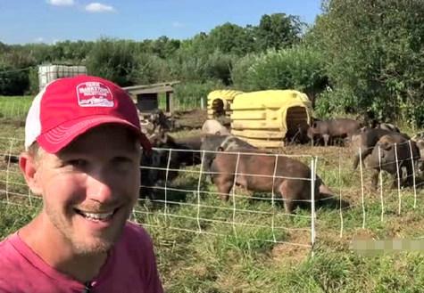 看看外国人农场怎么养猪,真的很惬意