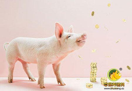 猪价下跌不可怕,不要太担心现在的行情