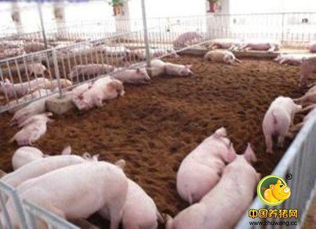 养猪场粪便污水处理设施的几种形式