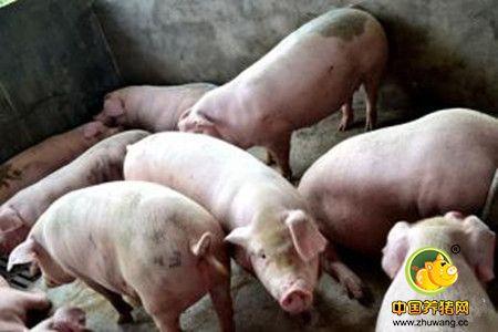 养猪场管理要点,实用又好记!