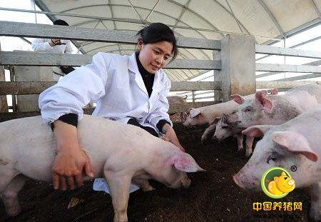 需求提升较弱猪价延续小涨 养殖户需注意猪病疫情