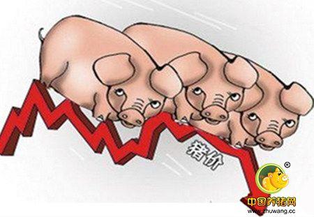 下半年无锡生猪价格震荡下行  养殖收益小幅减少