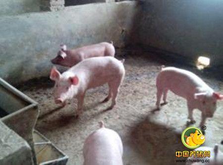春季猪场寄生虫病的防控分析
