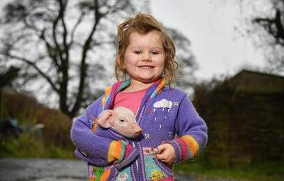 """英农场3岁女童耐心照料小猪,母亲称其""""猪语者"""""""