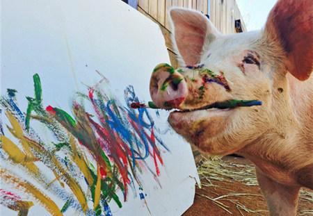 母猪会不会上树我不知道!但我知道会画画