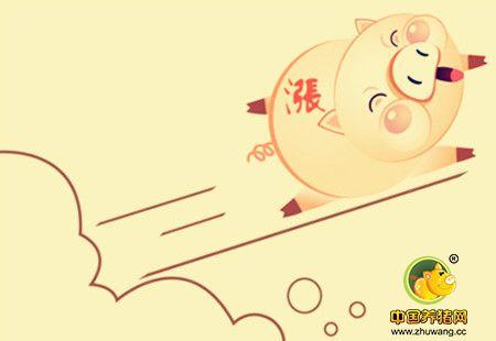 猪价暴涨外三元到了9.7!春节前后走势如何?!