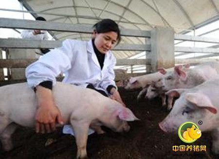规模化猪场寄生虫病的防控要领