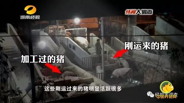 为了查清事实,记者继续对这家生猪中转站展开调查。