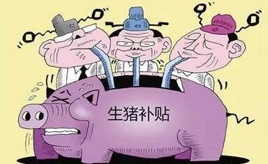 农村老汉养了一千头猪 却没有拿到补贴!为什么呢