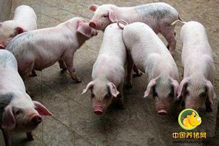 集约化猪场仔猪腹泻的致病机理、致病因素分析及综合控制方案