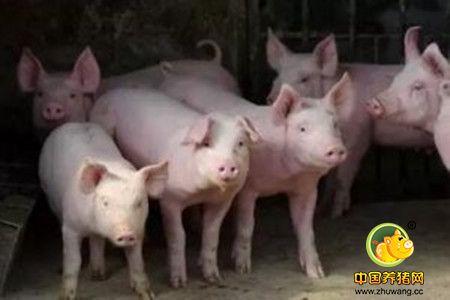 据说,就是这三毒让猪场损失惨重,您中招了吗?