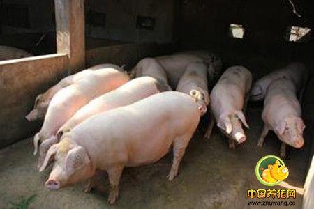 猪的病毒性传染病--猪痘