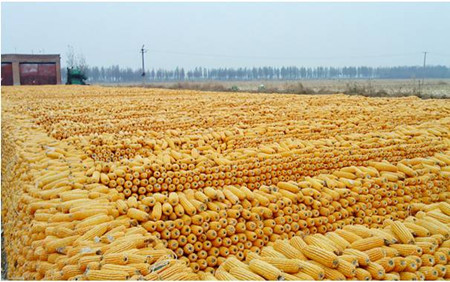 农业部:推广粮改饲,构建新型种养关系