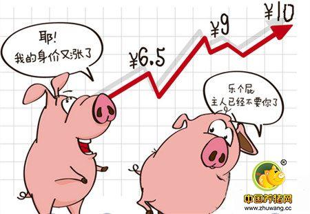养猪人的好消息:猪价一路向北 局部逼近10元