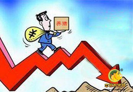 消费惨淡期遇上集中出栏期 危机,猪价将要下跌!
