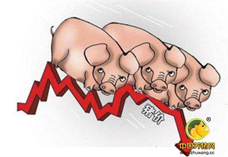 生猪价格局部回落,后市仍然不明朗